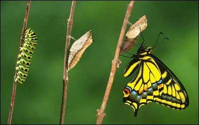 rups-naar-vlinder